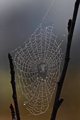 Old Superstitions About Spiders Image