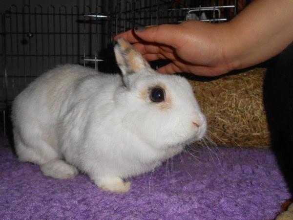 Mirana, lapine blanche-[adoptée] Mirana3-5f6cb