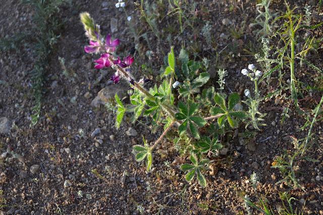 furry purple flowers