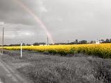Arcobaleno Arcobaleno+su+fiori+gialli