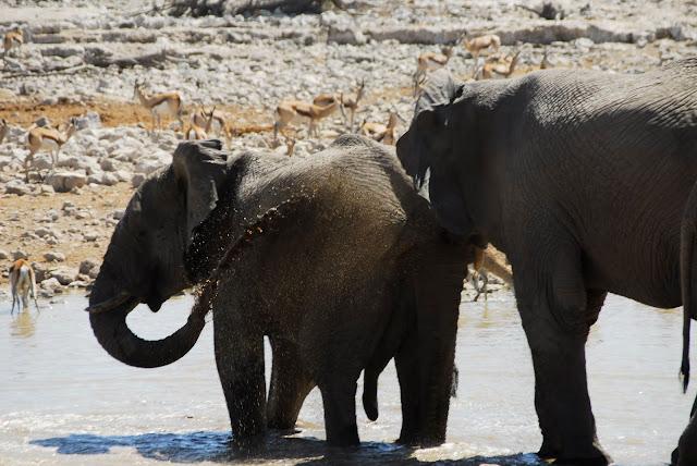 أفضل ما في أفريقيا  Best of Africa Namibia_180807123500