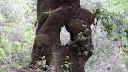 Tiens ! Cet arbre troué, je l'ai déjà vu quelque part...