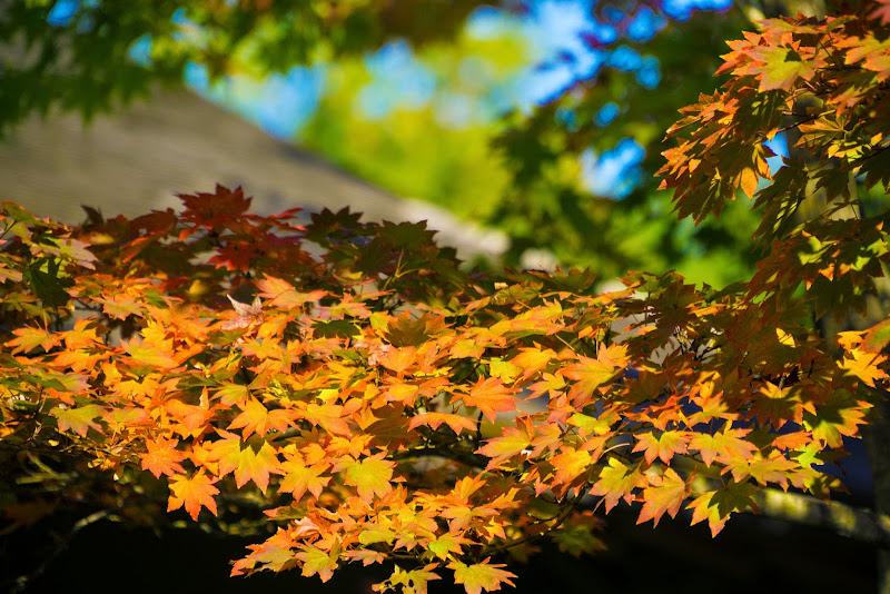 昭和記念公園 日本庭園 紅葉 写真13