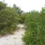 Narrow sandy track near the Awabakal Viewpoint (391811)