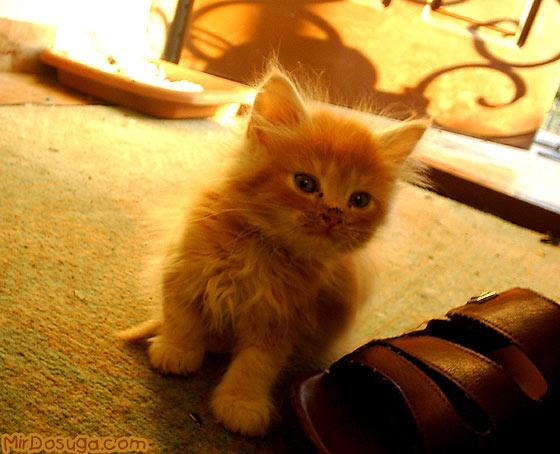 прикольные фото котят фото 4