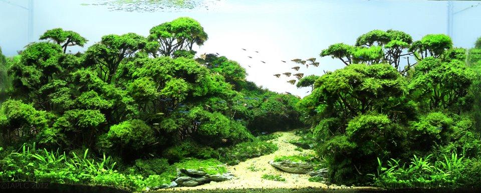 Bộ sưu tập hồ thủy sinh bố cục rừng