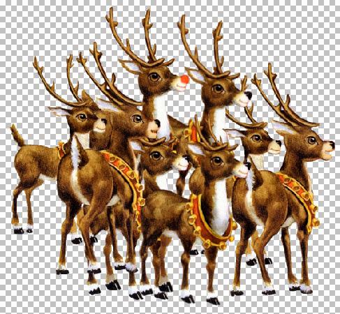 Rudolf-Reindeer~Shorebug2.jpg