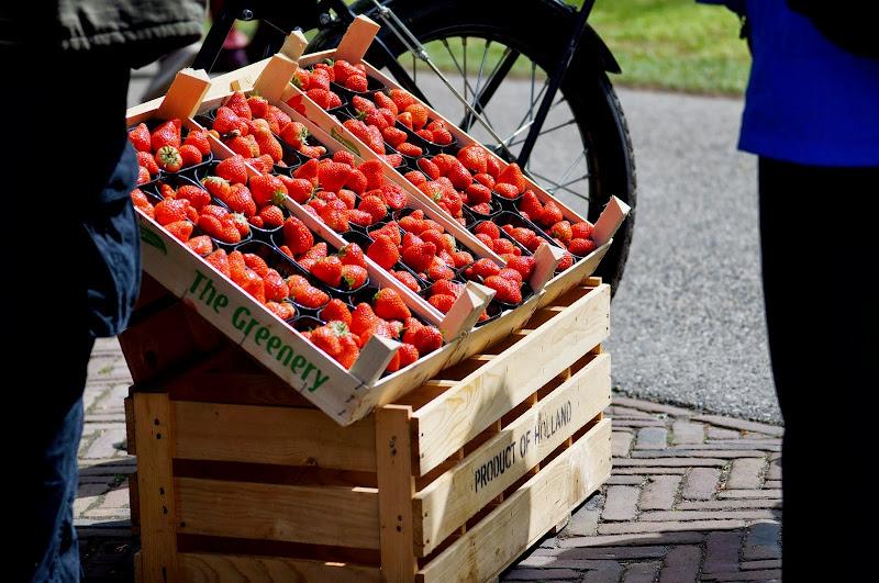 Strawberry Keukenhof