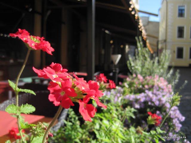 Рига в цветах