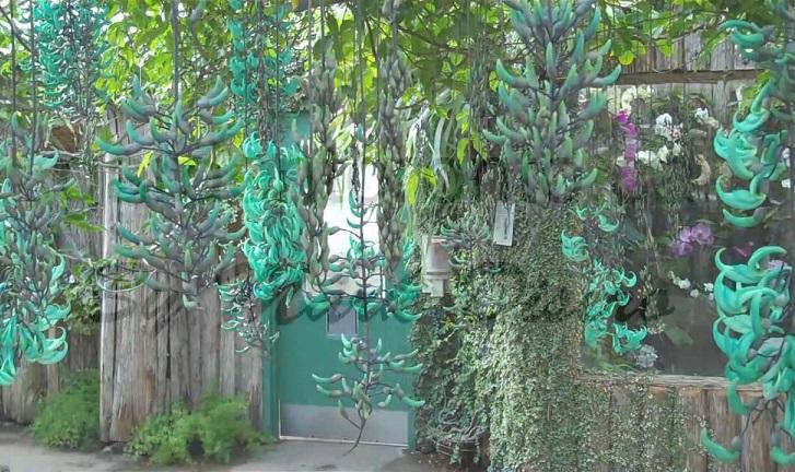 Hoa Móng Cọp quý hiếm - gian hoa mong cop xanh