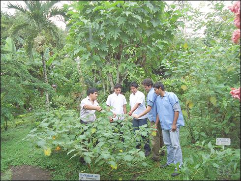 Essalud investiga propiedades medicinales de 500 especies for Jardin botanico medicinal