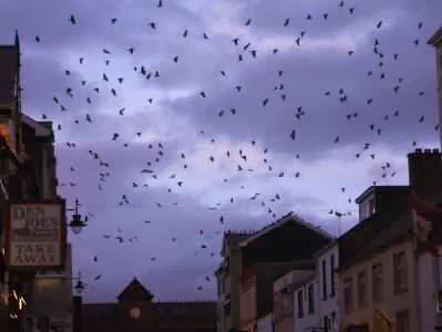 Abendstimmung mit Vögeln in Killarney, Irland