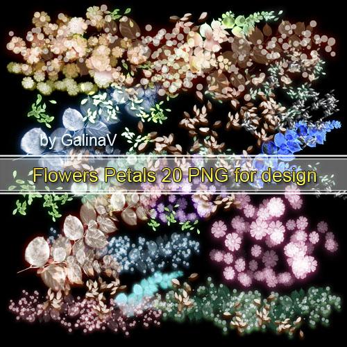 Клипарт Цветы, цветочные лепестки PNG (2)