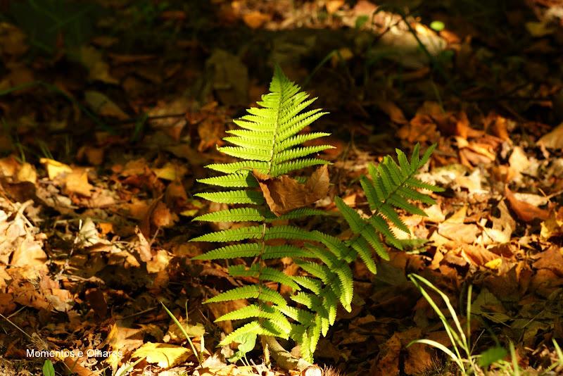Astúrias.. detalhes de um verão verde