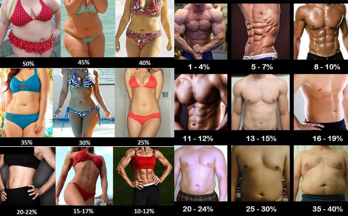 body fat chart.png