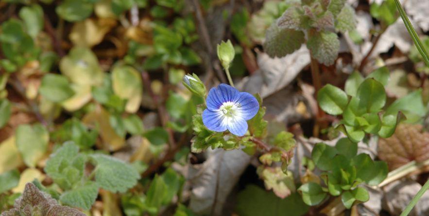 Field biology in southeastern ohio early spring wildflowers mightylinksfo