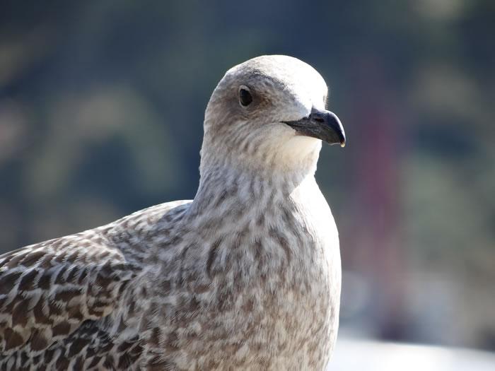 DSC01552.jpg - Les oiseaux � Saint-Malo par Bretagne-web.fr