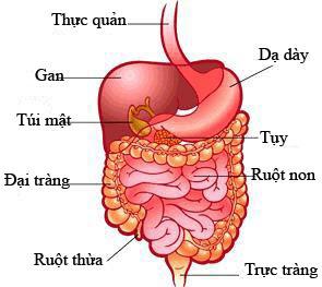 tra thai doc