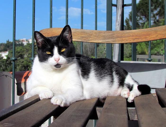 our cat Pintas