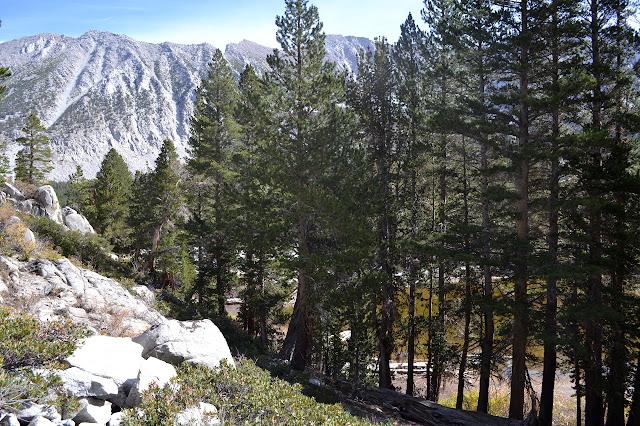 medium lake behind trees