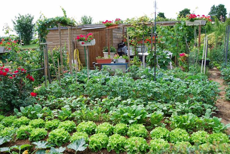 Jardin ouvrier et ses plantations, fleurs et légumes