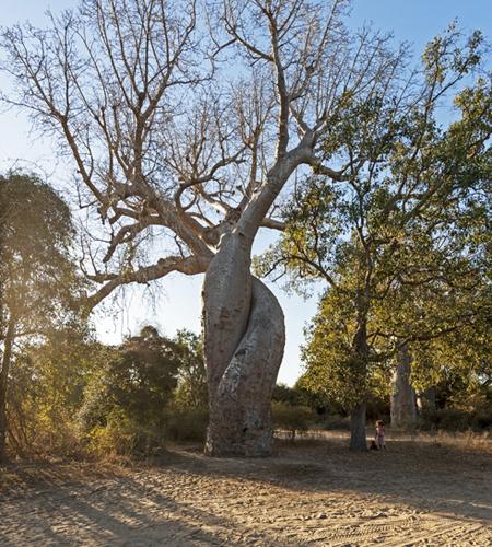 Hình ảnh tình yêu về cây
