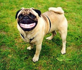 Risultati immagini per sorriso di circostanza