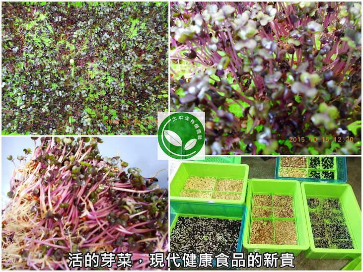 紫高麗,紫色高麗菜,紫色甘藍菜,紫高麗營養,紫高麗菜營養,紫甘藍菜變色,紫莖結球甘藍,紫包心菜,紫捲心菜,紫甘藍菜