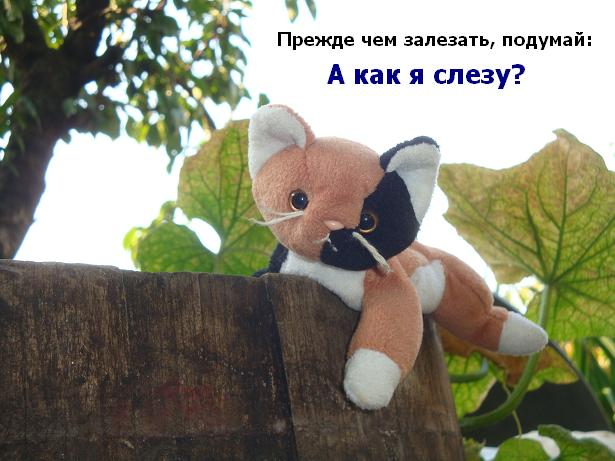 активные игрушки: котенок