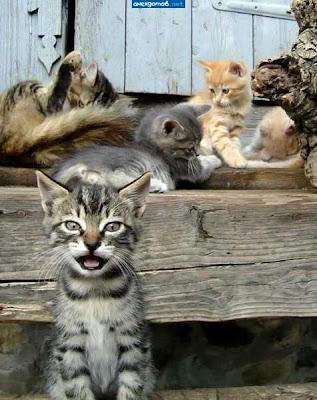 Как мы раздавали котят ...