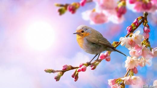 ảnh chú chim đậu trên cành hoa xuân