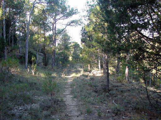 Senderismo: Cañón del río Alcalá - Navas Altas. PR-TE 26 GR-8