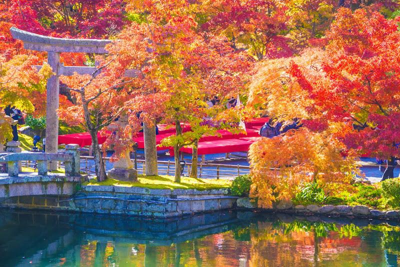 京都 永観堂 紅葉 写真2