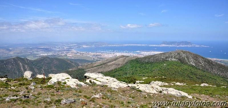 La última selva mediterránea