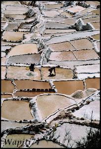 Un mois aux pays des Incas, lamas et condors (Pérou-Bolivie) - Page 2 CD1%2520%2528126%2529