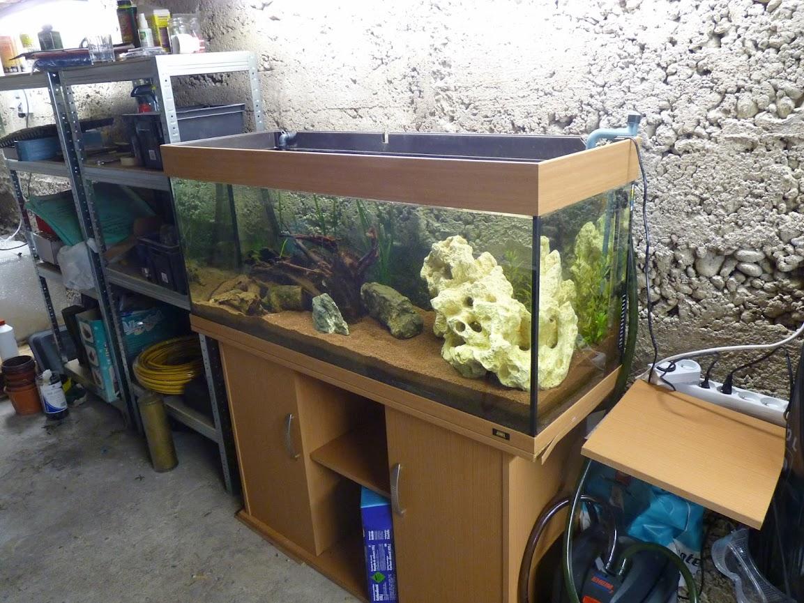 Ma petit histoire Aquariophile de 2009 à aujourd'hui  P1030710