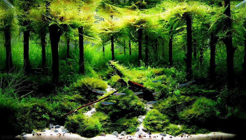 Vinh Aqua giới thiệu bộ sưu tập hồ thủy sinh rừng