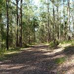 Kingtree Ridge Fire Road (365477)
