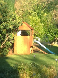 white cat sitting in garden den in the sunshine