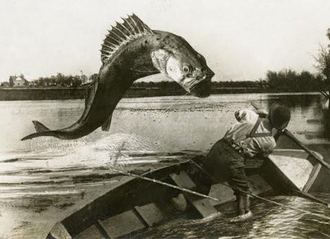 Um peixe gigante em fotomontagem de William Martin