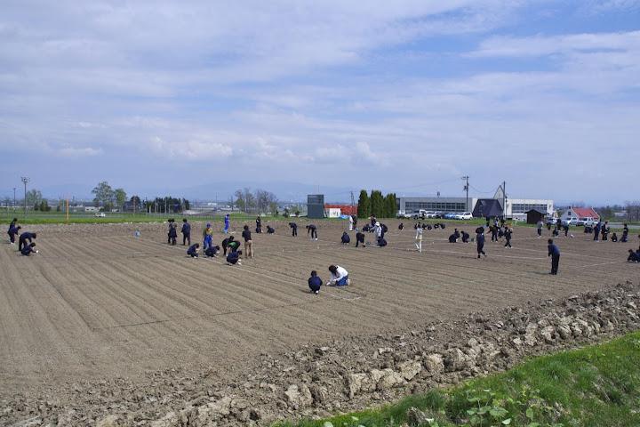写真:北竜中学校「世界のひまわり」播種