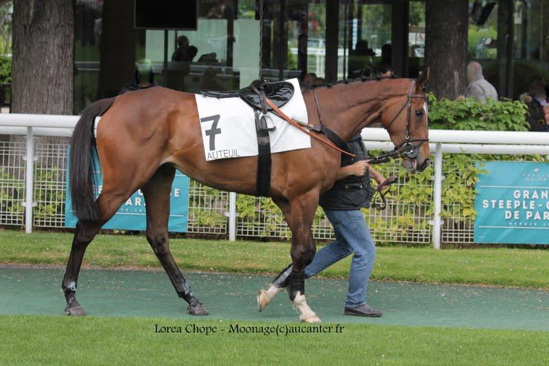 Photos Auteuil 16-05-2015 Week-end printanier de l'obstacle  IMG_9512