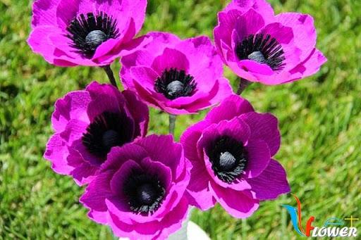 hoa anh túc màu tím từ giấy nhún