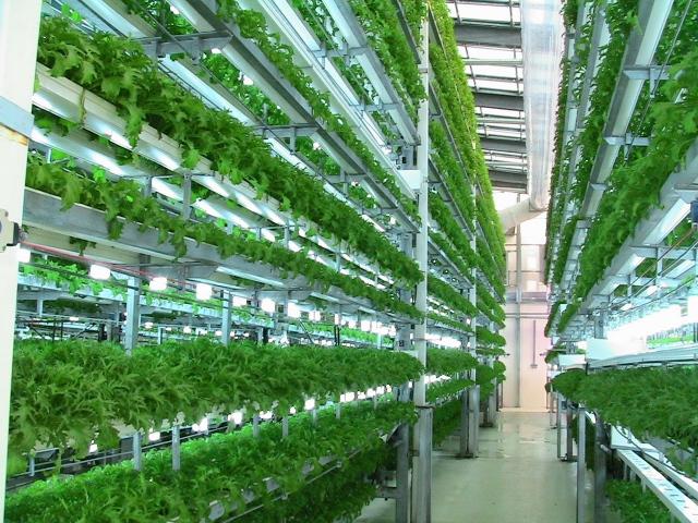 Đơn hàng nông nghiệp cần 6 nữ làm việc tại Oita Nhật Bản tháng 08/2017