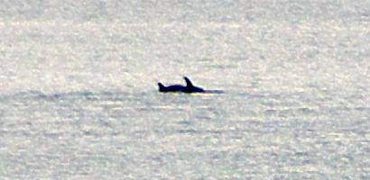 Delfine in der Bucht von Palermo