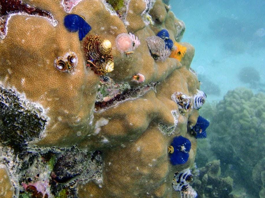 Christmas Tree Worm Rock, Naigani Island, Fiji.