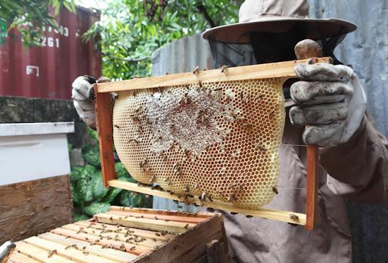 Mật ong Highlandbee là mật ong 100% tự nhiên nguyên chất nuôi trong rừng tự nhiên