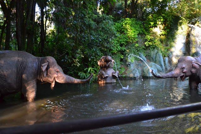 Trip report voyage 1996 et Wdw Orlando 10/2011 - Page 3 DSC_0222