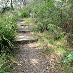 Steps on the Mt Trefle Track (252479)