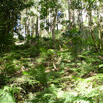 The undergrowth of the forest (32687)